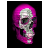 Chris Orr_Bone Idol Pink_©2019